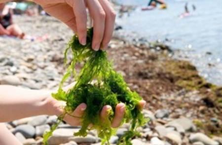 Sortie Découverte des algues